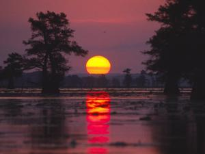 Cypress Swamp at Sunrise by Diane Miller