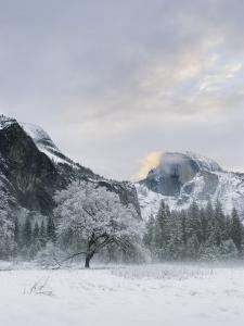 Half Dome, Yosemite, California by Diane Miller