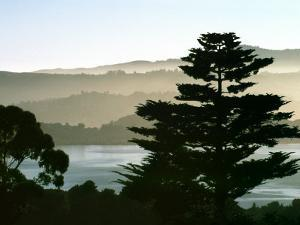 Hazy Mountain Lake, Seen from Top of Hill in Tiburon, Northern California, USA by Diane Miller