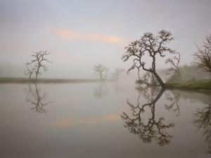 Misty Lake Scene with Trees by Diane Miller