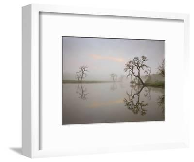 Misty Lake Scene with Trees