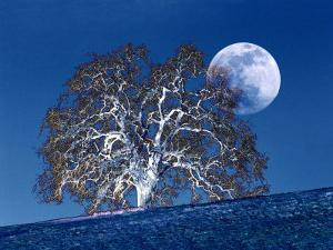 Oak Tree and Moonrise by Diane Miller