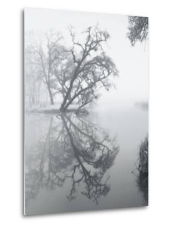Trees Amidst Fog