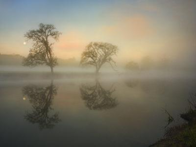 Trees Reflected in Lake by Diane Miller