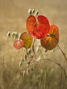 Wild Grape Leaves and Oats by Diane Miller