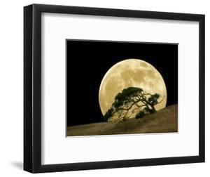 Windswept Live Oak Tree and Rising Full Moon at Night by Diane Miller