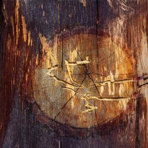 Woodworm Hieroglyphics by Diane Miller