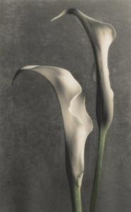 Two Lilies II by Diane Poinski