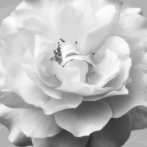Beautiful Dreams 1 by Dianne Poinski