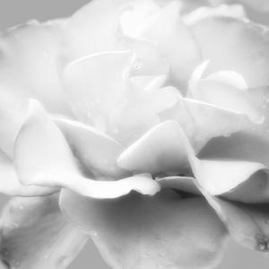 Beautiful Dreams 5 by Dianne Poinski