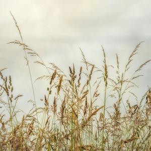 Bluff Grass 1 by Dianne Poinski