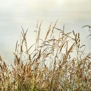 Bluff Grass 2 by Dianne Poinski