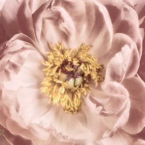 Burgundy Bloom 1 by Dianne Poinski