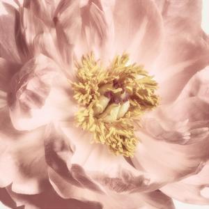 Burgundy Bloom 2 by Dianne Poinski