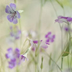 Early Spring 1 by Dianne Poinski