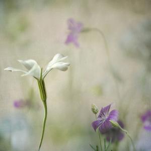 Early Spring 2 by Dianne Poinski