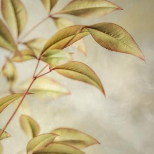 Golden Leaves 1 by Dianne Poinski