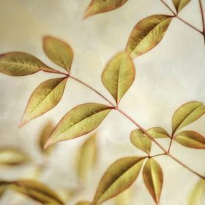 Golden Leaves 2 by Dianne Poinski