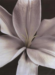 Lily II by Dianne Poinski