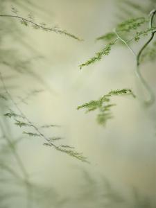 Soft Adagio 1 by Dianne Poinski