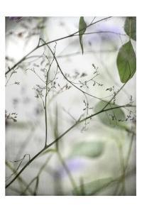 Soft Leaves I by Dianne Poinski