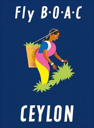 Ceylon (Sri Lanka) - BOAC (British Overseas Airways Corporation) - Sri Lankan Tea Picker by Dick Negus & Philip Sharland