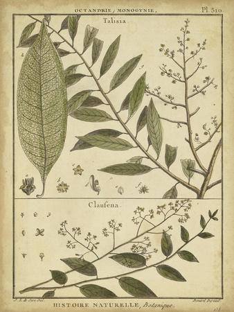 https://imgc.artprintimages.com/img/print/diderot-antique-ferns-i_u-l-pfsgcd0.jpg?p=0
