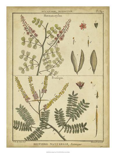 Diderot Antique Ferns II-Daniel Diderot-Art Print