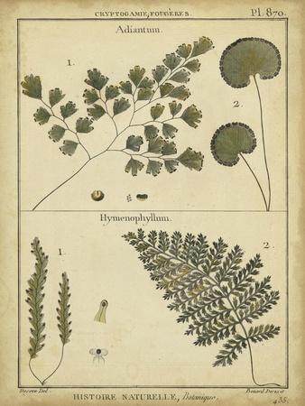 https://imgc.artprintimages.com/img/print/diderot-antique-ferns-iv_u-l-pfsgtn0.jpg?p=0