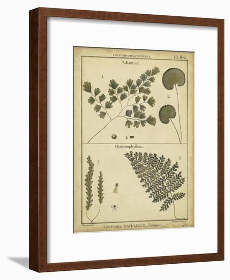 Diderot Antique Ferns IV-Daniel Diderot-Framed Art Print