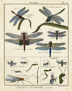 Histoire Naturelle Insects I by Diderot