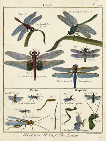 Histoire Naturelle Insects I