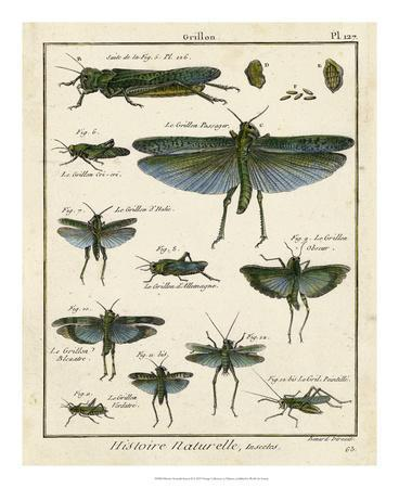 Histoire Naturelle Insects II