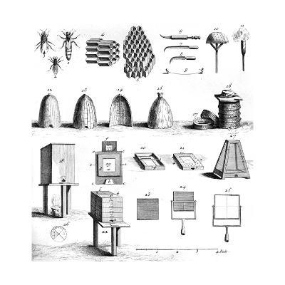 Diderot Hives--Giclee Print