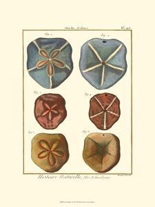 Sand Dollars I by Diderot