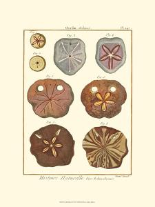 Sand Dollars II by Diderot