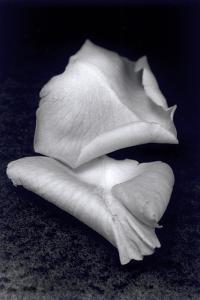 Untitled, 1990-2000 by Didier Gaillard