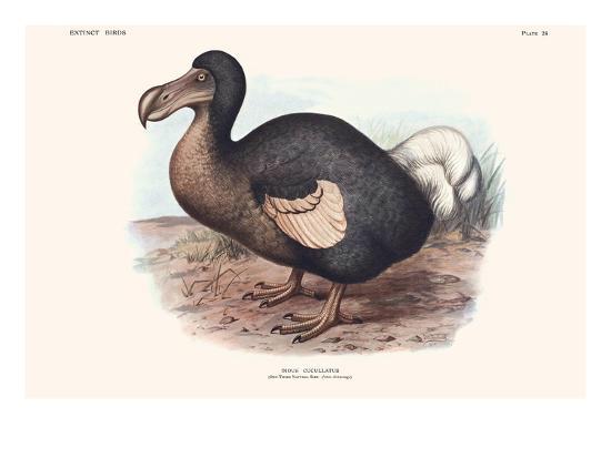 Didus Cucullatus, Dodo,-Lionel Walter Rothschild-Art Print