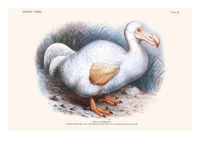 Didus Solitarius Dodo-Lionel Walter Rothschild-Art Print