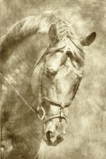 Diego I-Alan Hausenflock-Art Print
