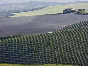 Country House in Middle of Olive Fields by Diego Lezama