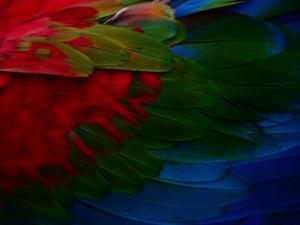 Macaw Plumage Detail by Diego Lezama