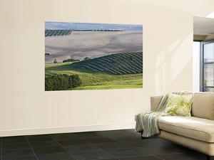 Olive Fields Share Space with Other Crops by Diego Lezama