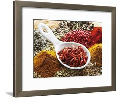 Dried Chillies in Spoon on Assorted Spices