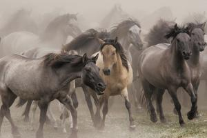 Wildpferde by Dieter Uhlig