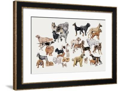 Different Breeds of Dogs--Framed Giclee Print