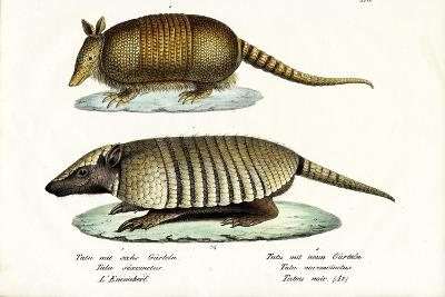 Different Kinds of Armadillos, 1824-Karl Joseph Brodtmann-Giclee Print