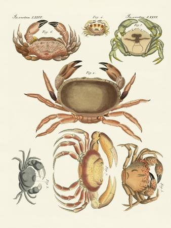 Different Kinds of Crabs