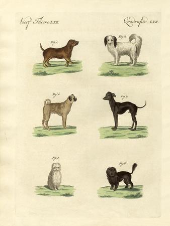 https://imgc.artprintimages.com/img/print/different-kinds-of-dogs_u-l-pvql8t0.jpg?p=0