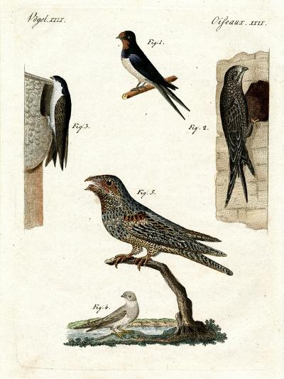 Different Kinds of Doves--Giclee Print